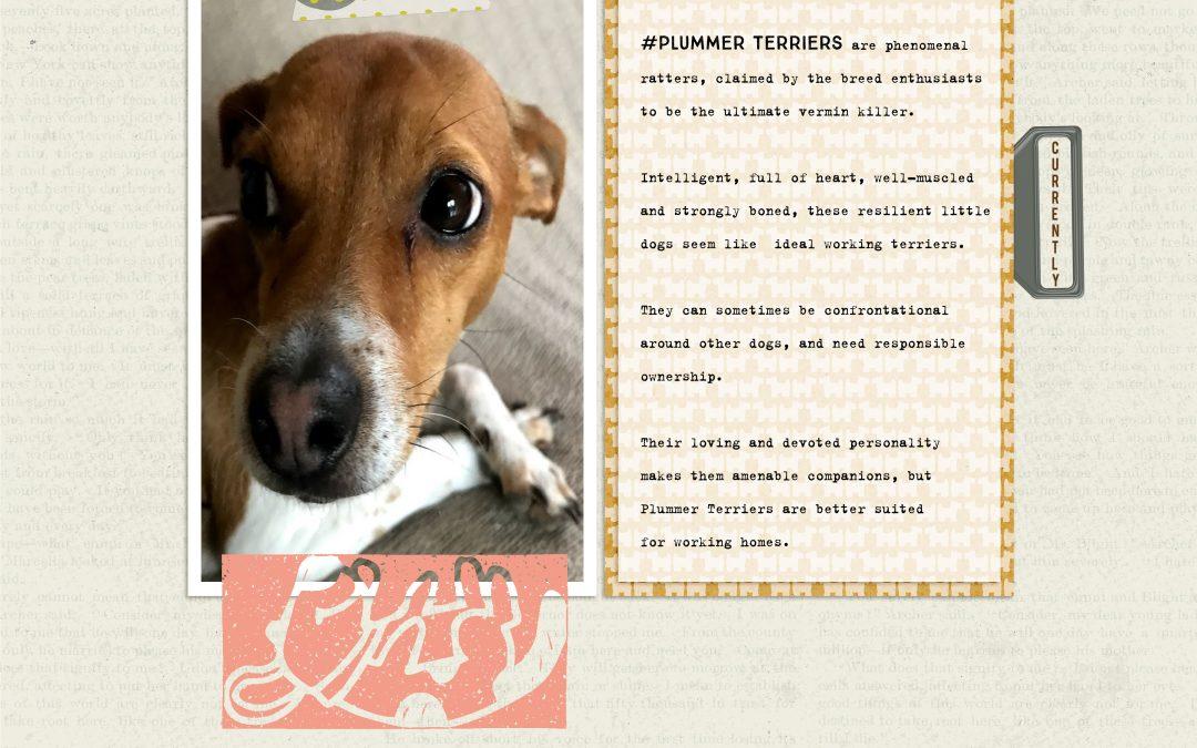 New Freebie: Pet Shop Toys Quick Page 02