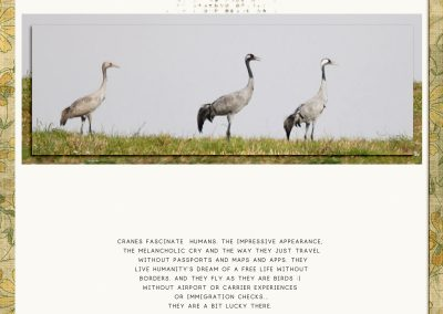 binagreene-baltic-cranes700webviewlayout